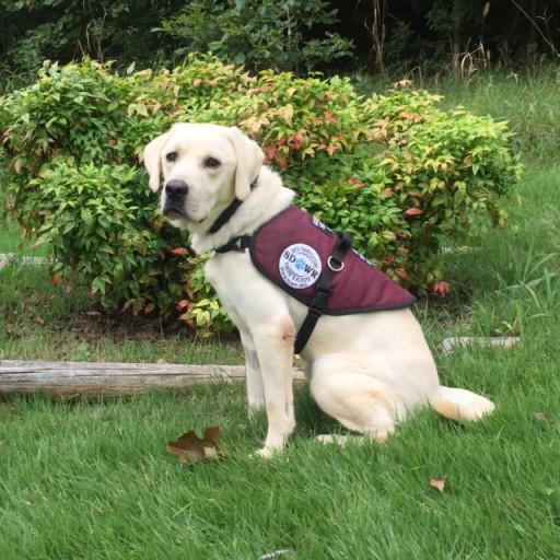 Diabetic Alert Dog Bentley Will Help Young Girl Manage Type 1 Diabetes