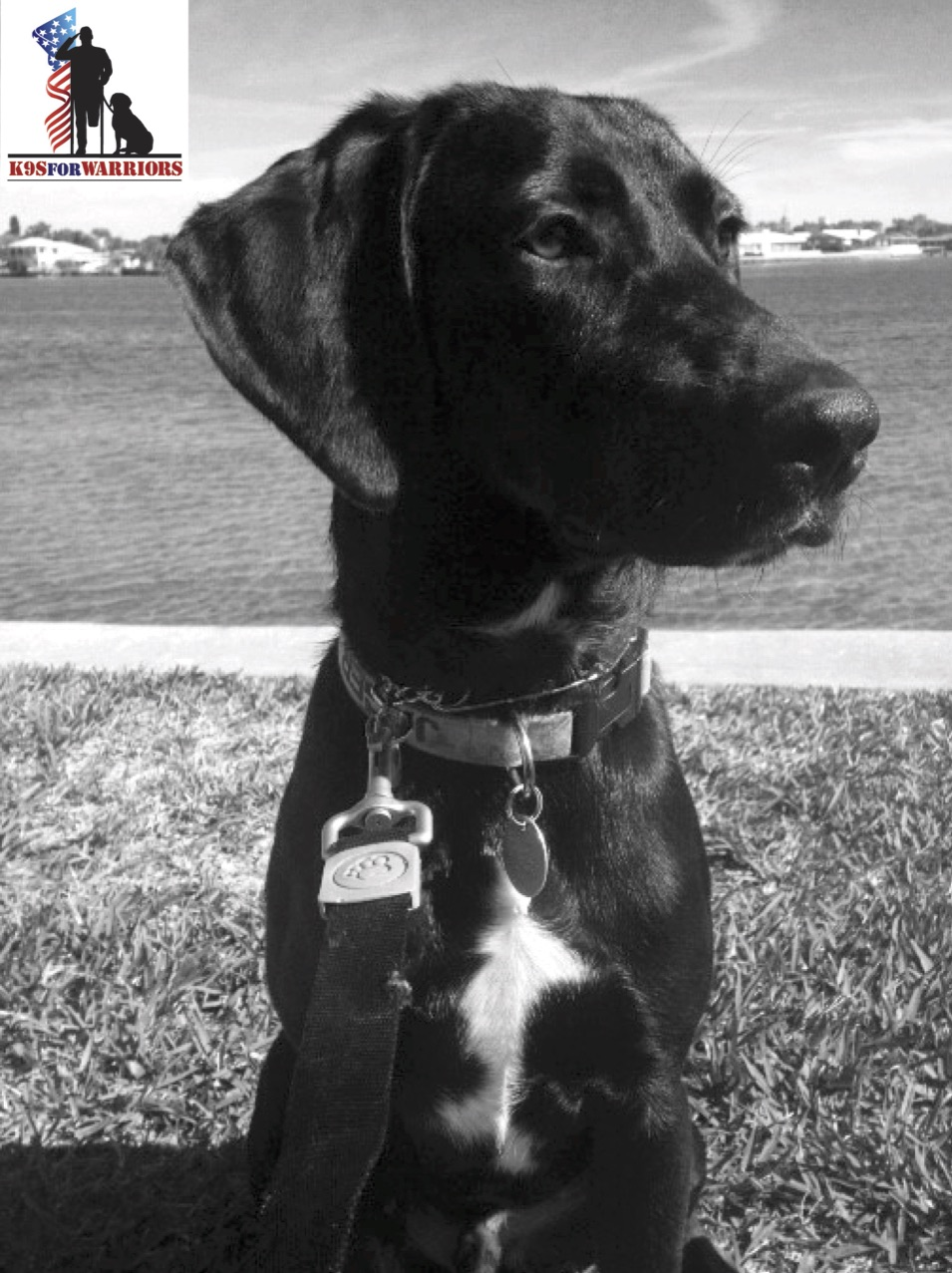 Wounded Warrior Service Dog Act Of