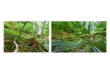 Large Tree Damage - Large Tree Removals