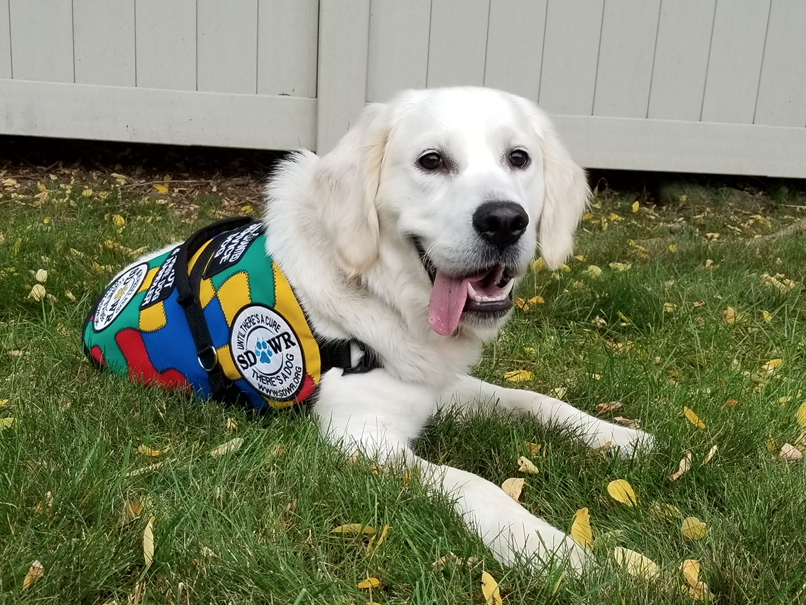 Trained Autism Service Dog To Help Five Year Old Child In Springfield Oregon Newswire