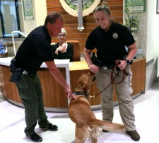 Demonstration of how sniffer dogs are trained to find illegal drugs.