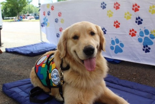 Service Dogs by Warren Retrievers Delivers Autism Service Dog to Center Valley, PA