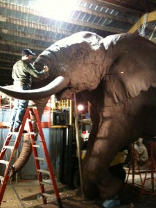 35' Elephant by Lorenzo Ghiglieri