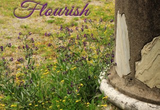 Flourish Word of the Year