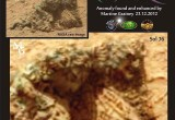 Petrified Couple Discovered On Mars