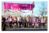Paws Fur Pink Starting Line