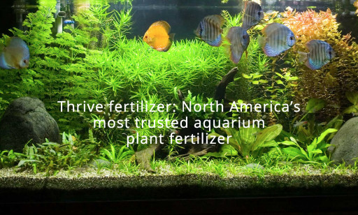 NilocG Launches New Website for the Only All-in-One Thrive Fertilization Solution for Planted Aquariums