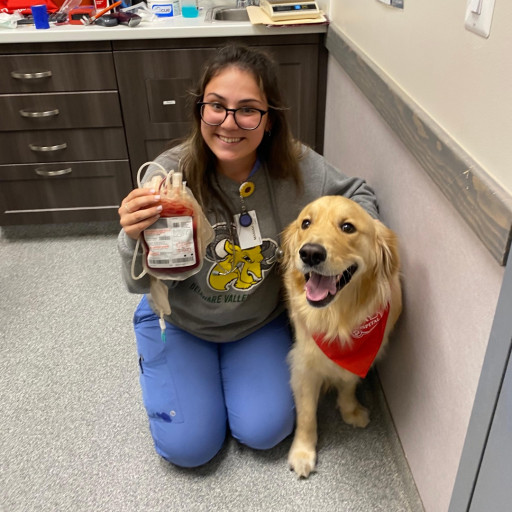 Upsurge in Companion Pet Population Brings Need for Canine Blood Donors. Mount Laurel Animal Hospital Plans Canine Blood Drive.