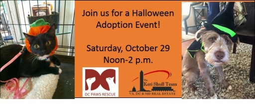 Keri Shull Team & DC Paws Rescue Host Halloween Pet Adoption Event