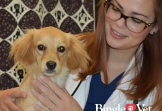 Veterinary Career Loving Pets