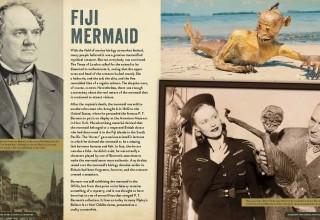 Fiji Mermaid Spread