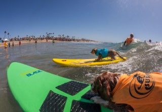 Small dog party wave Photo by Daren Fentiman