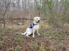Beamer, a Diabetic Alert Service Dog, to assist 7-year-old in California