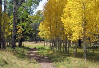 Beautiful Flagstaff Trails