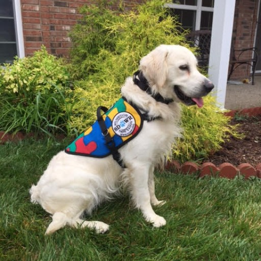 Service Dogs by Warren Retrievers Delivers Autism Service Dog to Child in Charlestown, Indiana