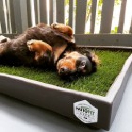 Patio Pet Life Provides an All-Natural Potty Solution for Pets That Don't Have a Backyard