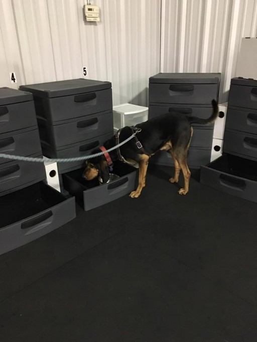 Fido's Nosework Keep Scent-Work Training Facility Looking New With Greatmats