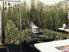 WeedGenics Grow Facility
