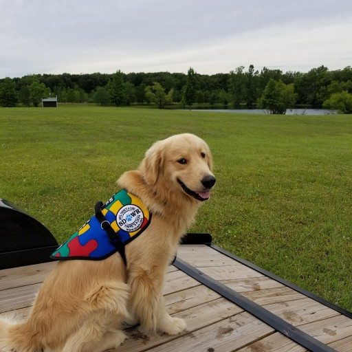 Service Dogs by Warren Retrievers Delivers Autism Service Dog to Twins in Marysville, OH