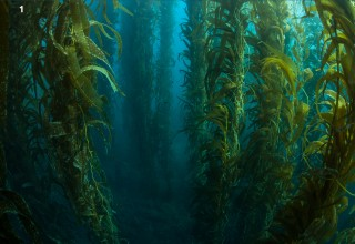 a material they created that is made with kelp. In the ocean