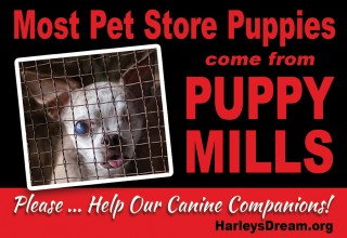 Most Pet Store Puppies come from Puppy Mills