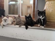 War Room Rescue Kittens