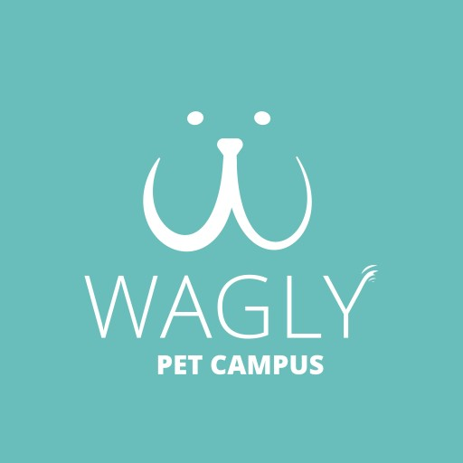 Wagly Continues to Grow and Hire Top Leadership