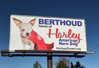Harley's Berthoud Billboard