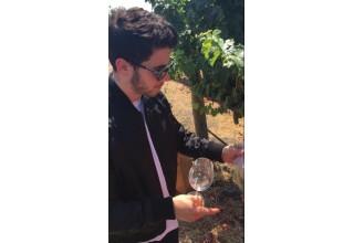 Nick Jonas Welcomes 2017 Harvest Season at Honig Vineyard & Winery
