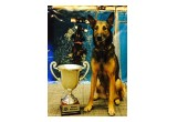 Rex & His World Champion DockDogs Cup