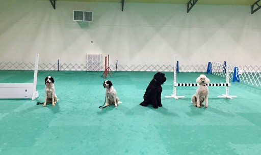 Greatmats Cushioned Dog Training Floor Adds Safety to Dream Indoor Dog Space for Retired Alabama Teacher