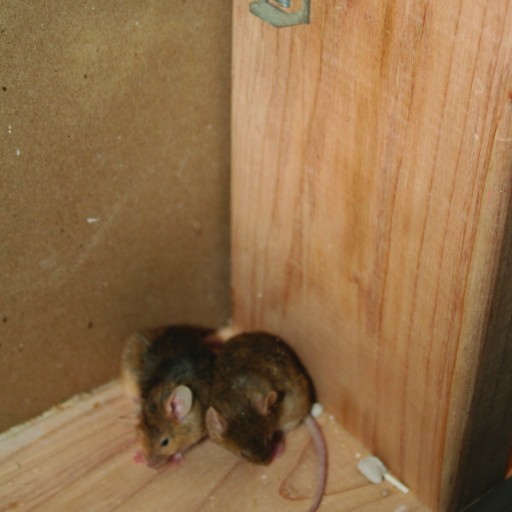 Cooler Weather Sends Rodents Indoors