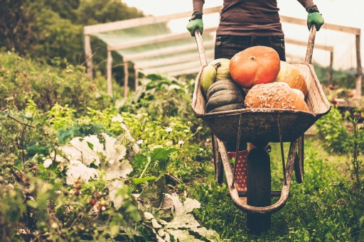 Organic Food: The United Kingdom Is Putting Quality Before Price