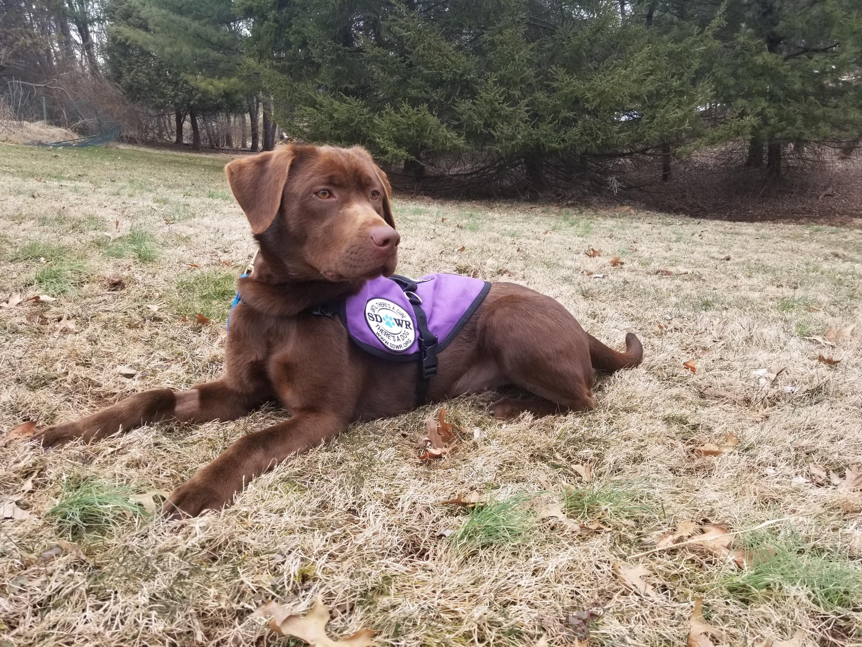 Seizure Response Dog Breeds