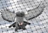 Nixalite Bird Netting
