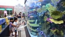 Aquarium created by Innovative Acrylics