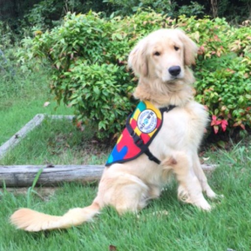 Trained Autism Service Dog to Help Eight-Year-Old Cope With Disability