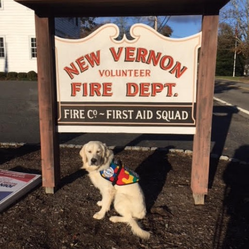 Highly Trained Autism Service Dog to Assist Four-Year-Old Child in New Vernon, New Jersey