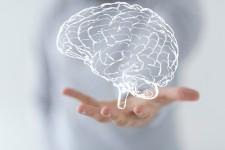 Brain Research