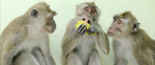 Alpha Genesis Warns of Critical Shortage of Research Primates