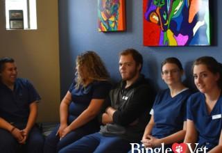 Bingle Vet Team Meeting