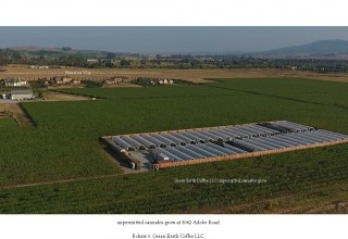 Illegal One-Acre Cannabis Cultivation in Sonoma County