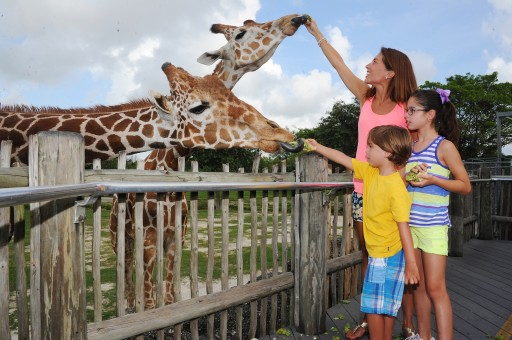 Zoo Miami Earns Certified Autism Center Designation