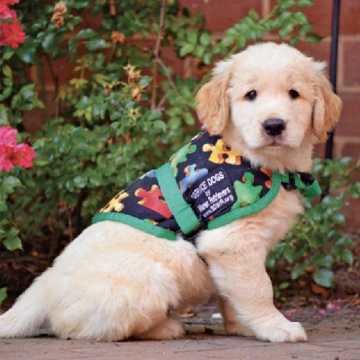 Service Dog Raisers Needed in DC, VA, MD and NC