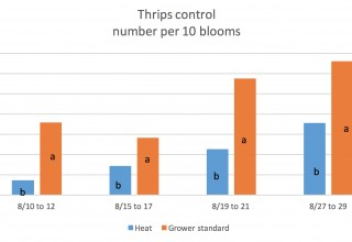Thrips Results Heat vs. Grower Standard