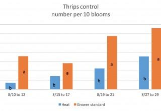 Thrips Results Heat vs. Grower Standard