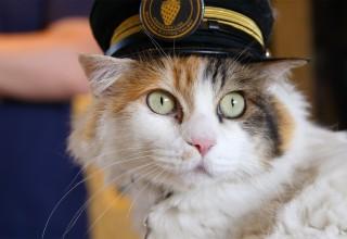 Nitama - the train station master cat