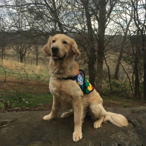 "Service Dogs by Warren Retrievers Delivers ""Ramses"" to Child in Powhatan, VA"