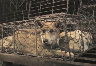 Scenes from the 'Road to Yulin ... and Beyond'