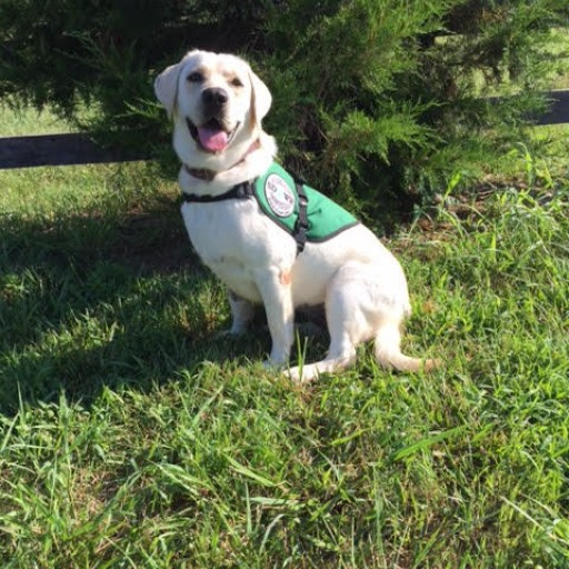 Service Dogs by Warren Retrievers Delivers Diabetic Alert  Service Dog to Somerdale, NJ